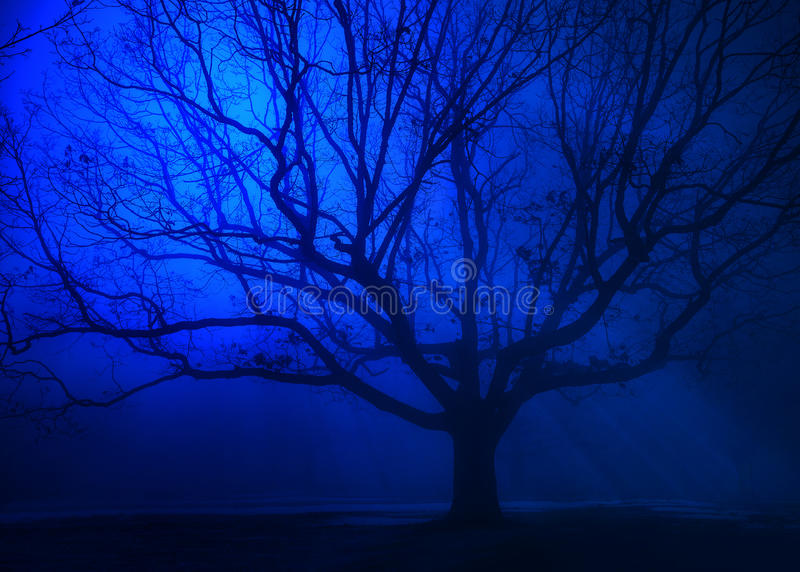 Árbol surrealista en niebla del azul del invierno foto de archivo