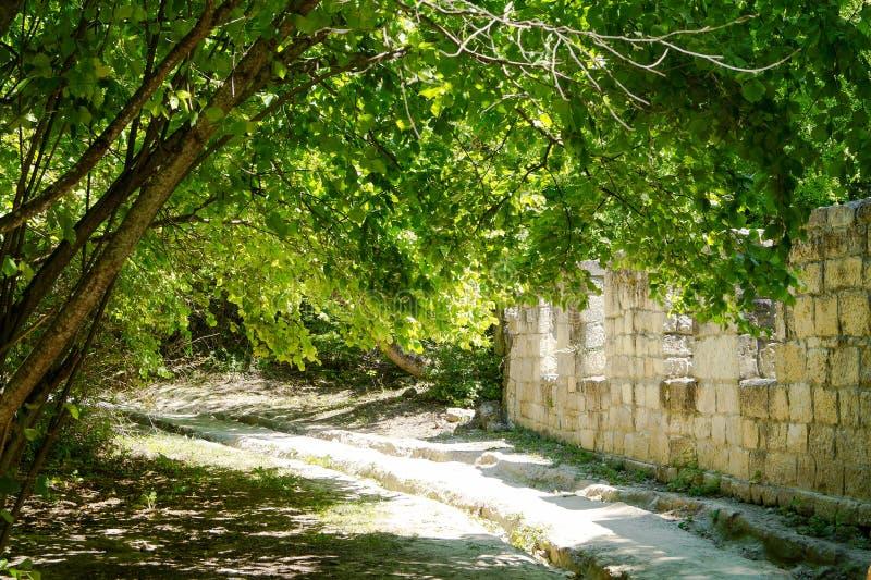 Árbol tendido cerca de una pared de piedra, Chufut-col rizada, Bakhchisaray, Crimea fotos de archivo libres de regalías