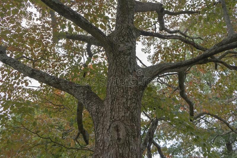 Árbol texturizado con las ramas que alcanzan hacia fuera imagenes de archivo