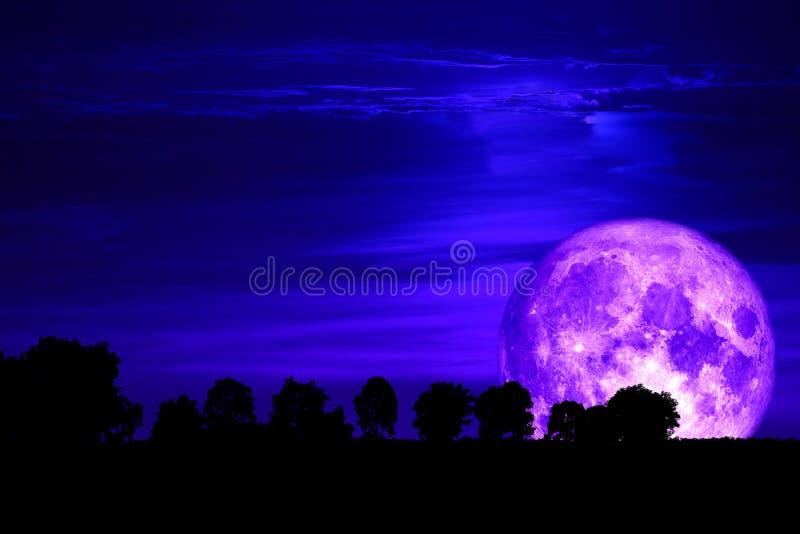 árbol trasero de la silueta de la luna púrpura estupenda de la nieve en el cielo oscuro foto de archivo