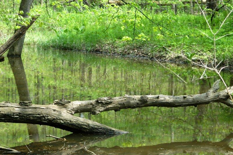 Árbol a través del agua imagen de archivo