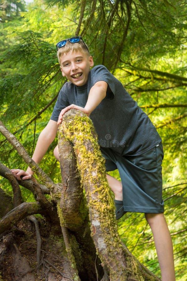 Árbol trepador en el bosque vertical imagen de archivo libre de regalías