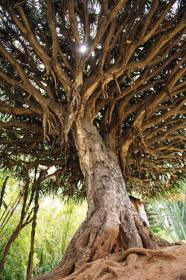 Árbol tropical imagenes de archivo