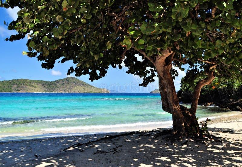 Árbol tropical en una playa en St. Thomas imágenes de archivo libres de regalías