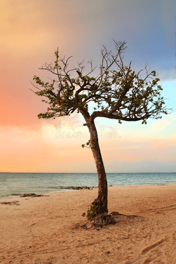 Árbol tropical reservado en paraíso foto de archivo libre de regalías