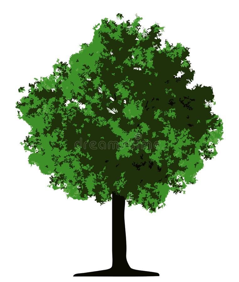 Árbol (vector) stock de ilustración