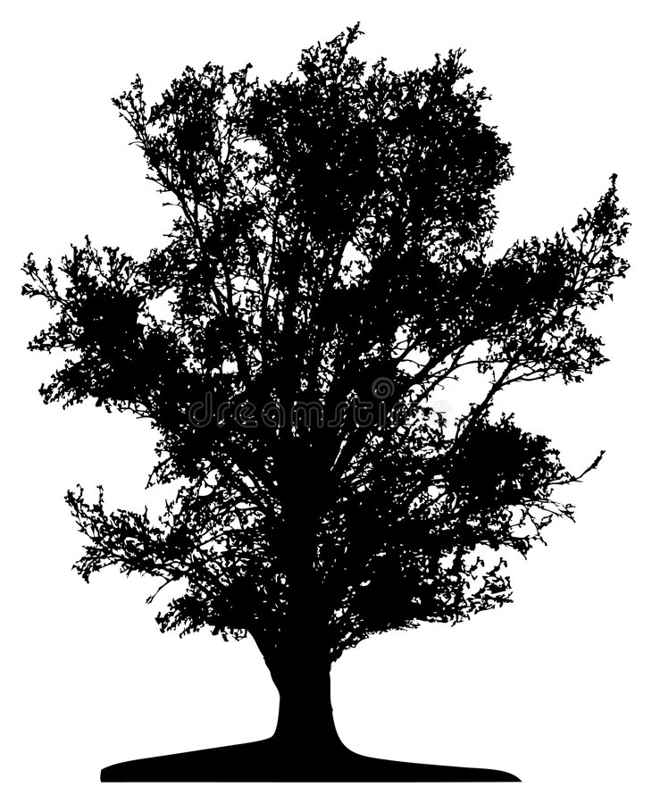 Árbol (vector) ilustración del vector