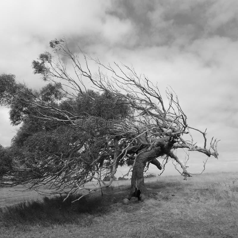 Árbol ventoso imagen de archivo libre de regalías