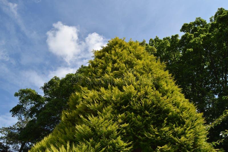 Árbol verde, cielo azul imagen de archivo libre de regalías