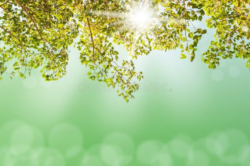 Árbol verde con el bokeh ligero borroso fotografía de archivo