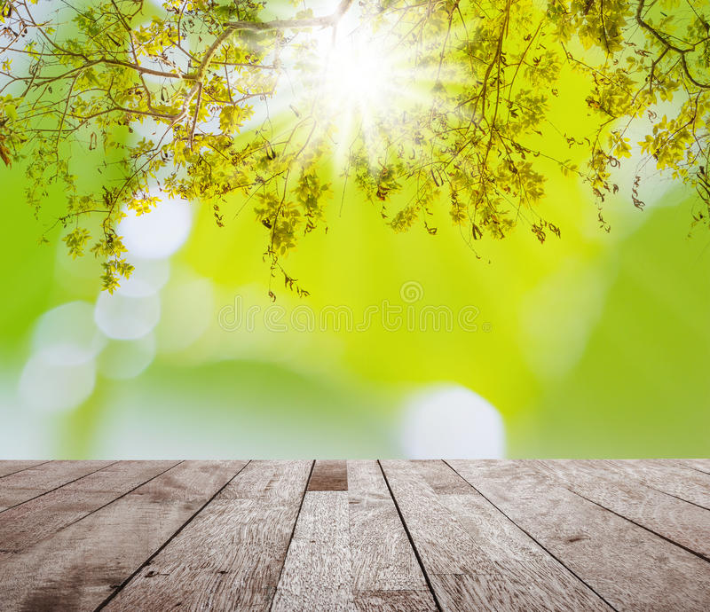 Árbol verde con el bokeh ligero borroso imágenes de archivo libres de regalías