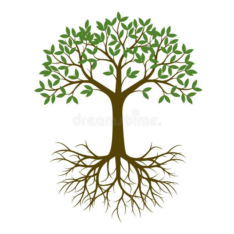 Árbol verde de la primavera con la raíz Ilustración del vector libre illustration