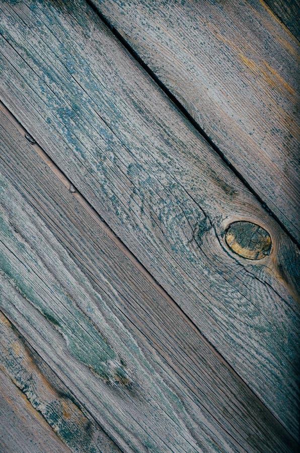 Árbol verde de la textura imagen de archivo