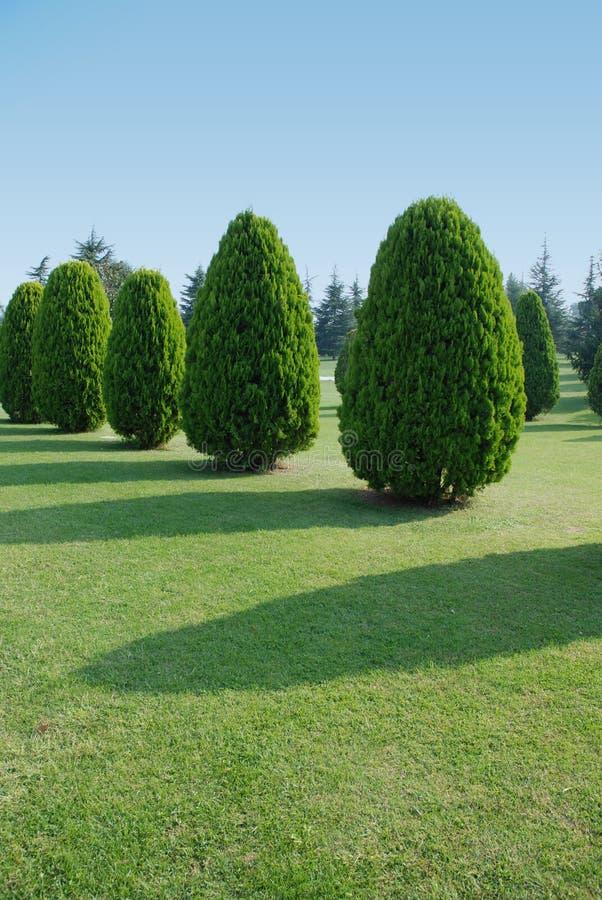 Árbol verde del jardín fotografía de archivo libre de regalías
