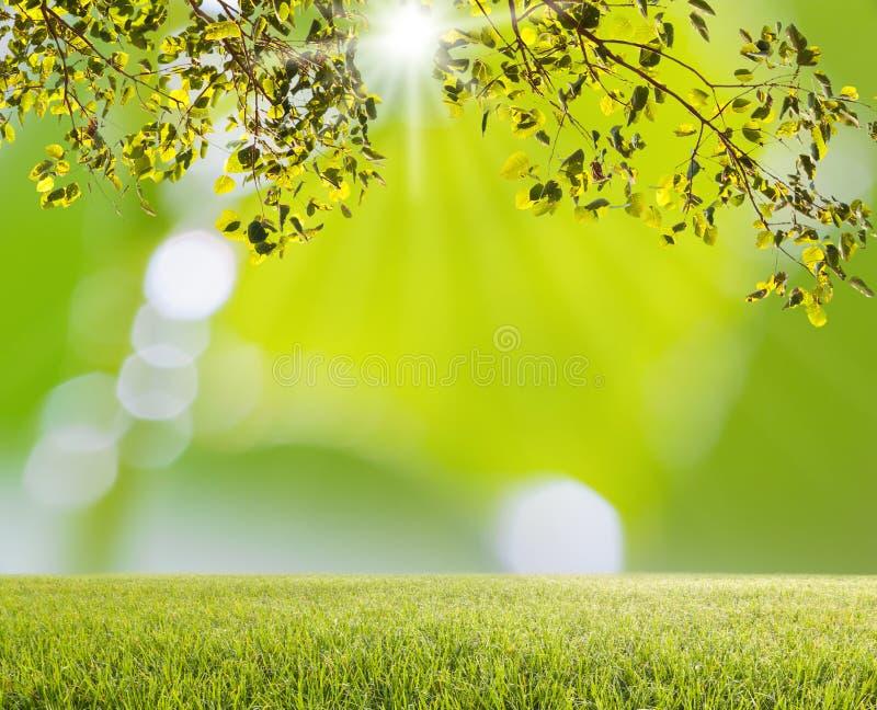 Árbol verde e hierba verde con el bokeh ligero borroso fotografía de archivo libre de regalías
