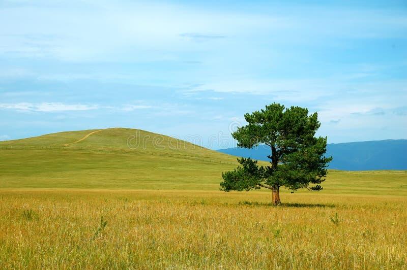 Árbol verde en campo amarillo fotos de archivo