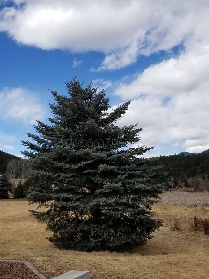 Árbol verde en Colorado fotos de archivo