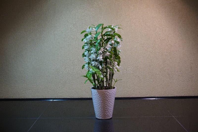 Árbol verde en el pote blanco fotos de archivo