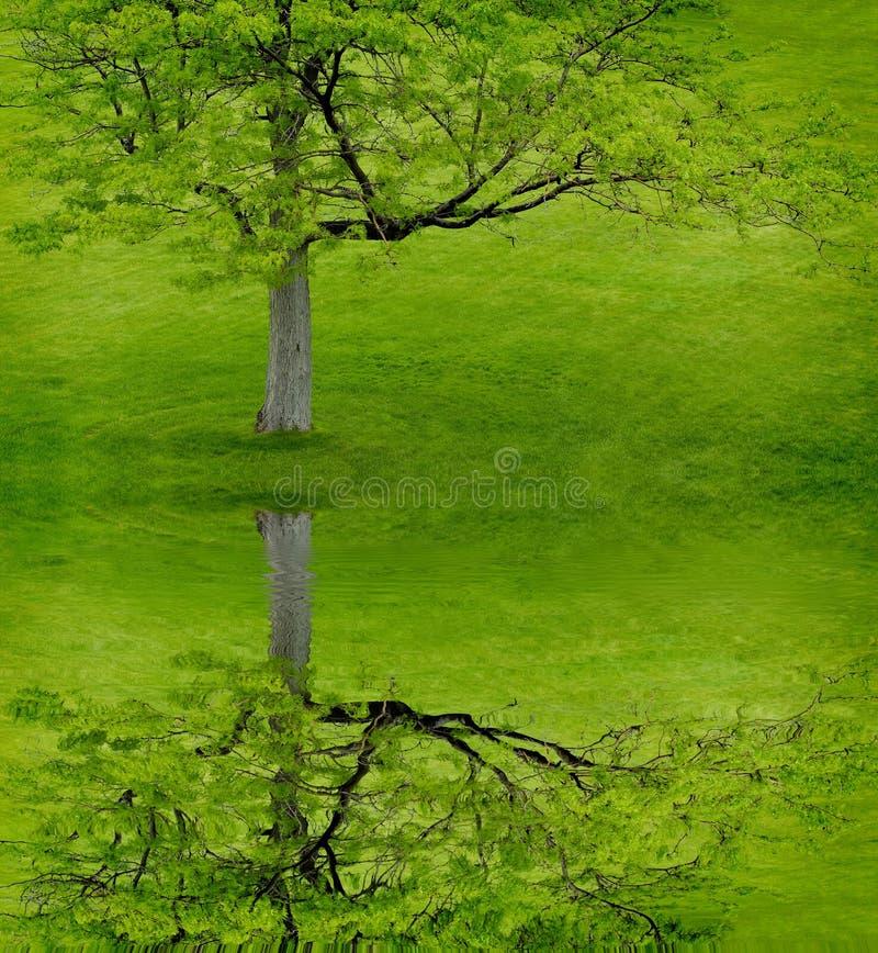 Árbol verde en la colina verde foto de archivo libre de regalías