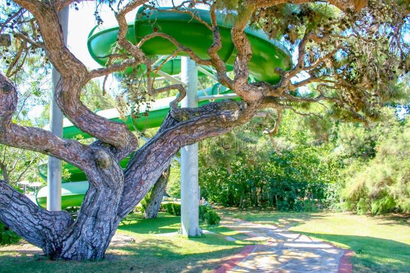 Árbol verde hermoso en un hotel cerca del waterslide Turqu?a fotografía de archivo