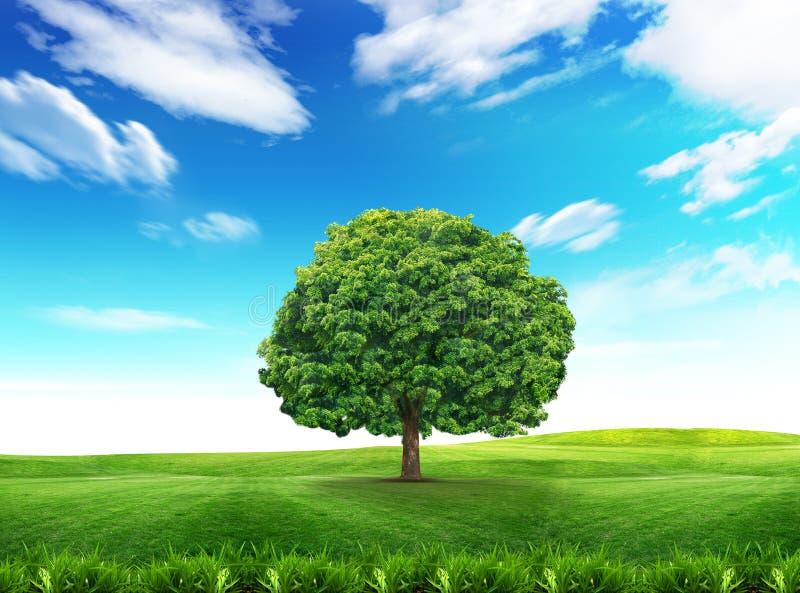 Árbol verde y cielo nublado imagen de archivo libre de regalías