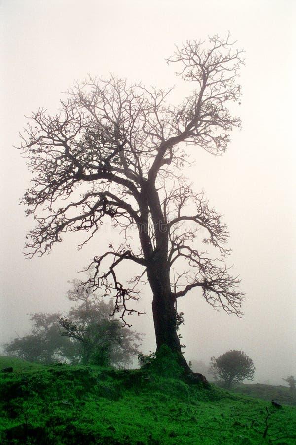 Download Árbol viejo imagen de archivo. Imagen de lluvia, algal - 1281189