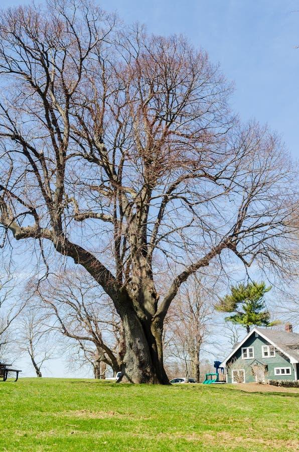 Árbol viejo asombroso en un parque foto de archivo