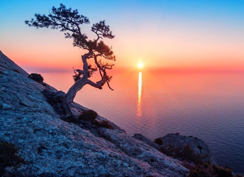 Árbol viejo del enebro en puesta del sol imagenes de archivo
