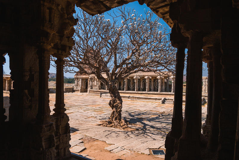 Árbol viejo en el patio de las ruinas antiguas del templo de Vittala en Hampi, Karnataka, la India imagenes de archivo
