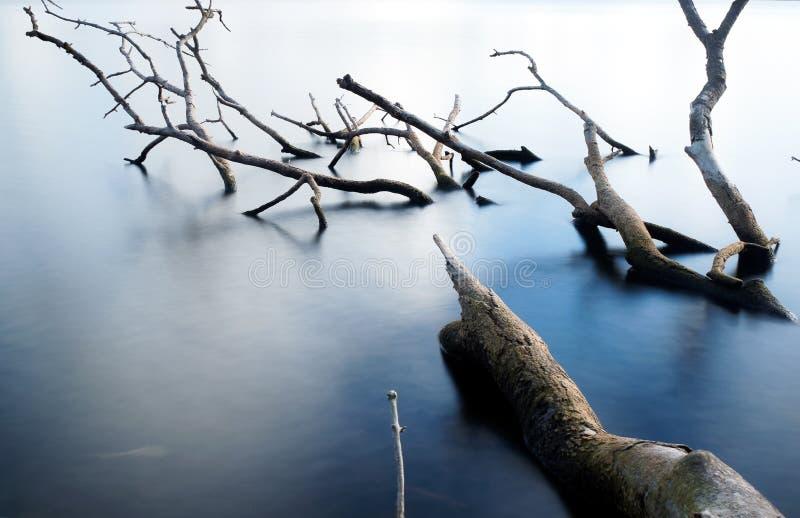 árbol viejo en la agua fría foto de archivo libre de regalías