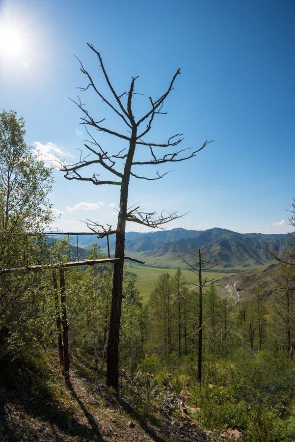 Árbol viejo en montañas imagenes de archivo