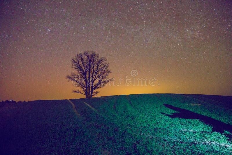 Árbol viejo en prado letón fotos de archivo