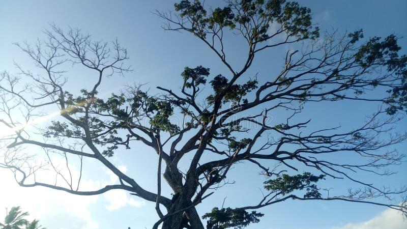 Árbol viejo en Sri Lanka imagenes de archivo