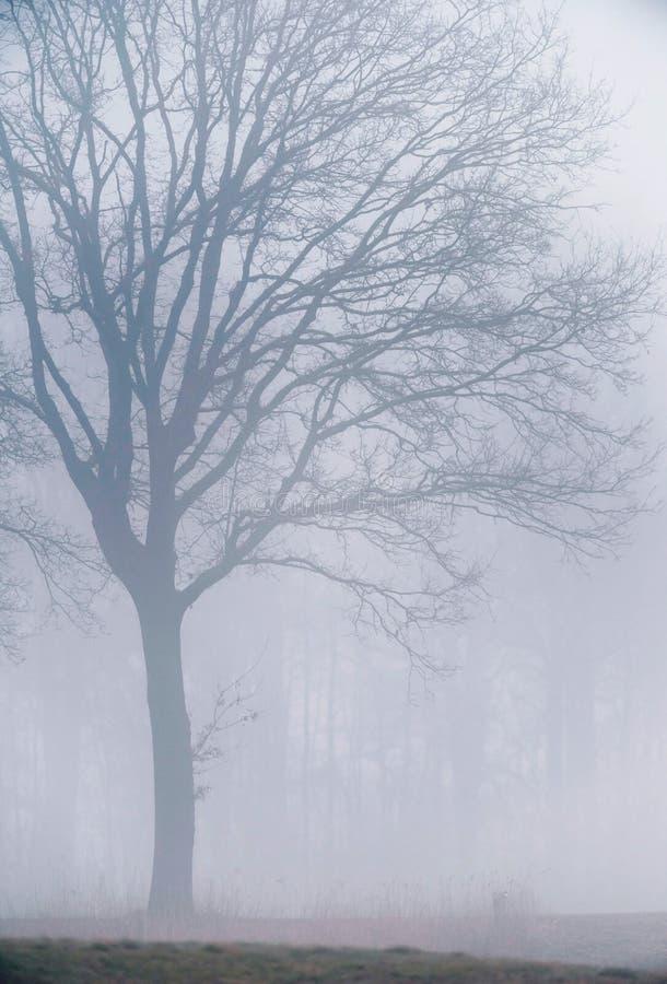 Árbol viejo grande del invierno en niebla imagenes de archivo
