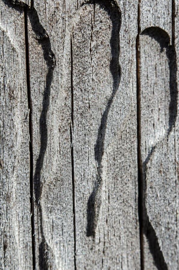 Árbol viejo La textura del escarabajo de corteza imágenes de archivo libres de regalías