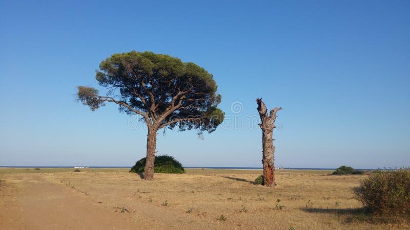 Árbol vivo y árbol muerto en el tiempo de la salida del sol de la costa de mar imagen de archivo