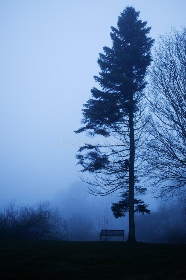 Árbol y banco de pino en crepúsculo de niebla. fotos de archivo libres de regalías