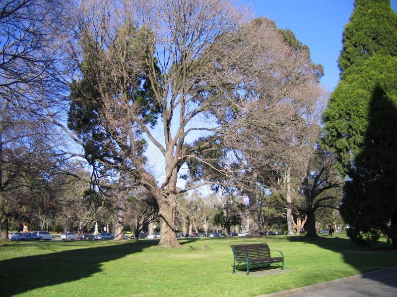 Árbol y banco grandes debajo en el parque, Melbourne imagenes de archivo