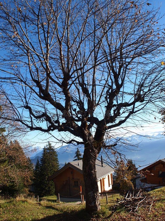 Árbol y casa en moutain del rigi foto de archivo libre de regalías