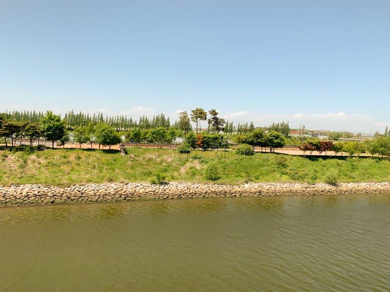 Árbol y cielo del verde del lado del río imagenes de archivo