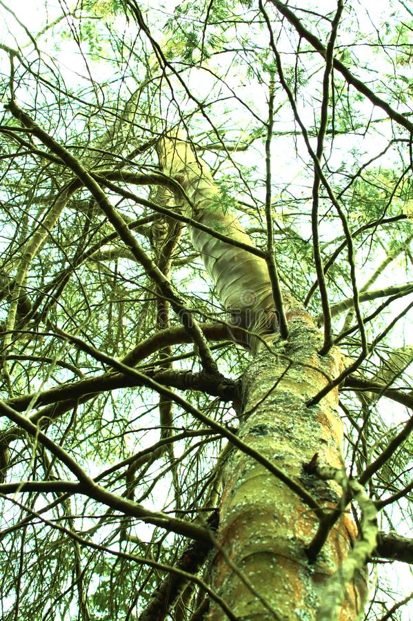 Árbol y cielo verdes fotografía de archivo libre de regalías