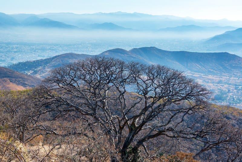 Árbol y colinas foto de archivo