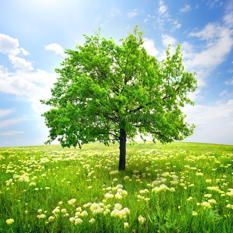 Árbol y flores salvajes foto de archivo libre de regalías