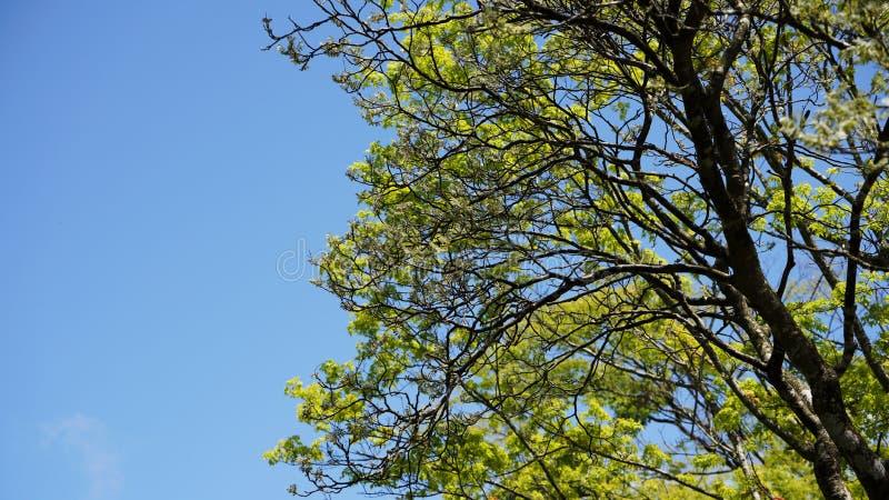 Árbol y hojas fotografía de archivo libre de regalías