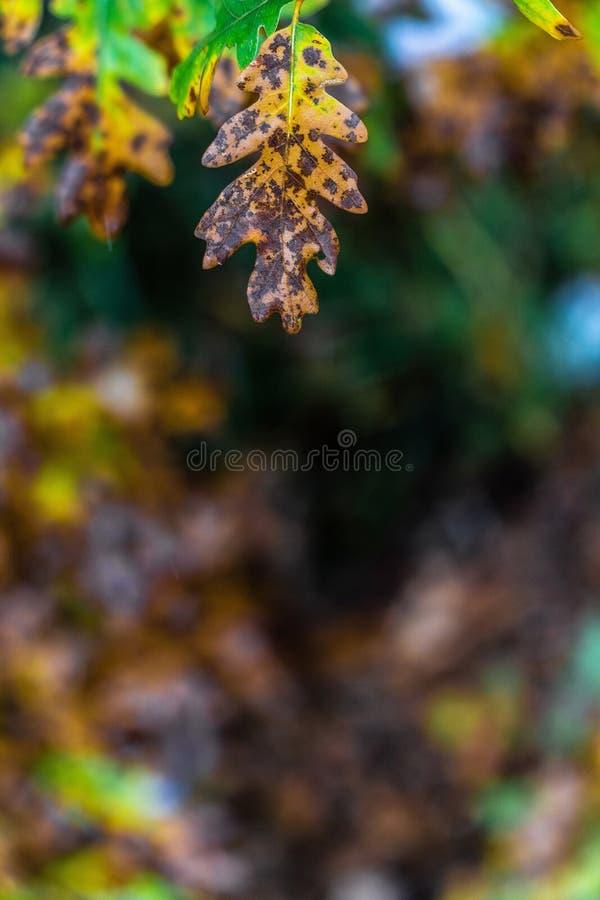 Árbol y hojas durante otoño de la caída después de la lluvia fotos de archivo libres de regalías