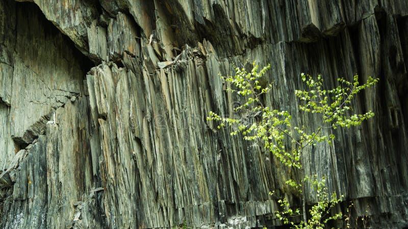 Árbol y la roca foto de archivo libre de regalías