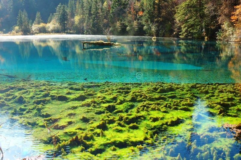 Árbol y lago del otoño fotografía de archivo libre de regalías