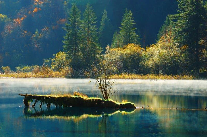 Árbol y lago del otoño en Jiuzhaigou fotografía de archivo