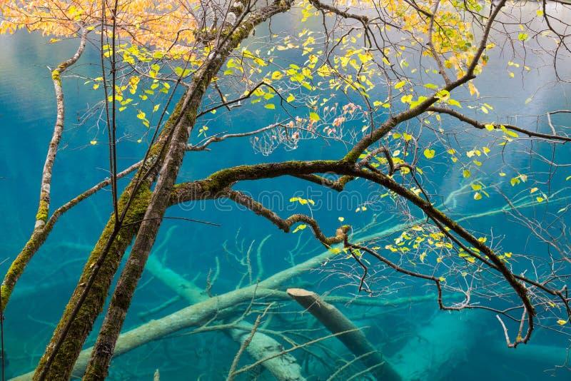 Árbol y lago, parque nacional de Jiuzhaigou, Sichuan del otoño imagen de archivo