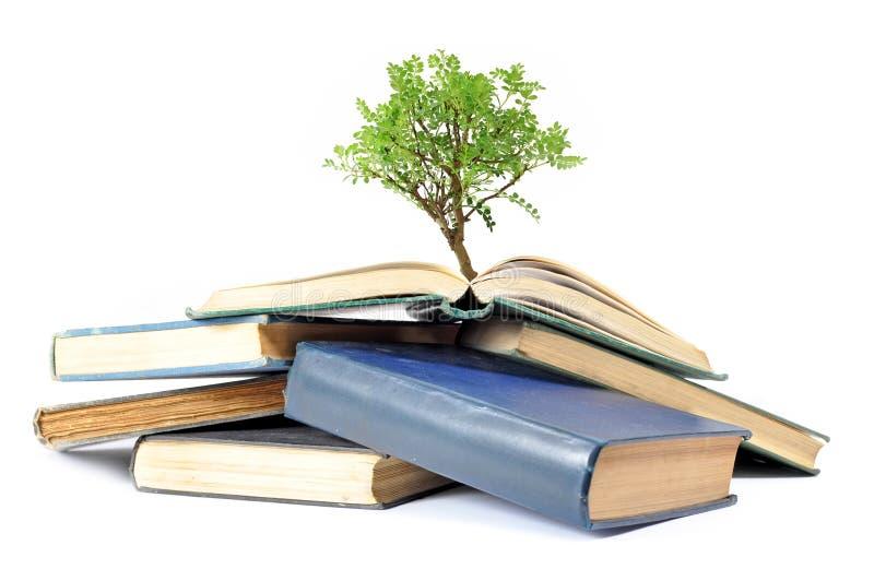 Árbol y libros imágenes de archivo libres de regalías